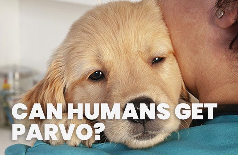 Can Humands Get Parvo